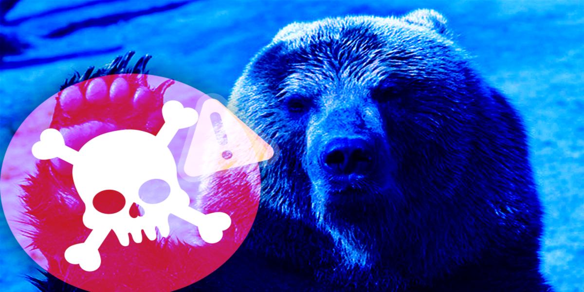 bear1200x600